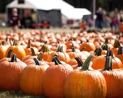 Fresno Pumpkin Patch by Country Pumpkins A Local Experience