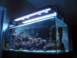 led and t5 hybrid my ultimate lighting system marine depot