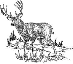 Deer Clip Art at Clker vector clip art online royalty free