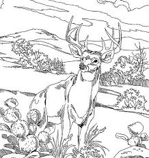 Realistic Deer Coloring Pages To Print