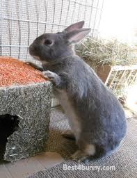 rabbit behaviour understand why your bunny does that best 4 bunny