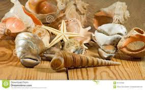 image de coquillage différent sur un plan rapproché en bois de