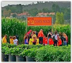 Tapia Brothers Pumpkin Patch by 7 Best Corn Mazes In Southern California In 2016