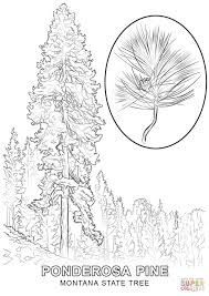 Christmas Tree Coloring Pages Printable by Montana State Tree Coloring Page Free Printable Coloring Pages