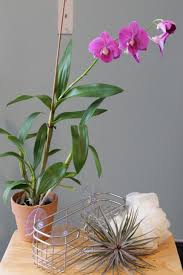 Good Plants For Windowless Bathroom by Feng Shui Bathroom In South Best Plants That Suit Your Fresh Decor