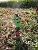 Roloff Pumpkin Patch by Destiney And Jacob Roloff Farms The Roloffs Pinterest