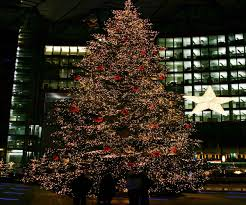Plantable Christmas Trees For Sale by Christmas Trees For Sale Christmas Lights Decoration