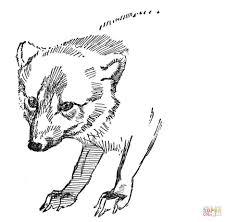 Dibujo De Retrato De Un Zorro Polar Para Colorear Dibujos Para