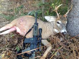 Deer Hunting W/my Colt 6920 - AR15.COM Barnes Ttsx Loose Archive Calgunsnet Corbon Ammunition Dpx 460 Sw Magnum Xpb 275 Grain 20 Rounds Black Powder Bullets Ammo Sportsmans Guide Federal Expander Gauge 2 34 58 Oz Sabot Slugs 5 What Bullet Is In Your Line 24hourcampfire Savage 220 20ga Hunting Equipment Lake Ontario United Cva Wolf Northwest Bullet Review The Big Game Blog Loading Me And The Ar15 121_tsjpg