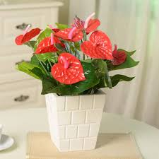 Fashion Small Artificial Potted Green Anthurium Plastic Flower Tree