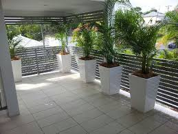 golden palm in pots golden canes palms in white wedge pots enchanted garden