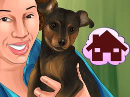 Do Miniature Pinschers Shed A Lot by 3 Ways To Choose A Minpin Wikihow