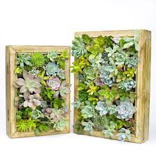 Easy DIY Succulent Living Picture Frame Kit