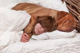 hund im bett und auf dem sofa kuscheln macht glücklich