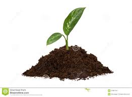 Pile of Soil and Green Leaves