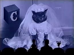 cat wedding dress kitty wedding loveday cat