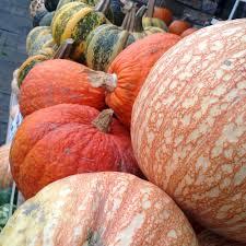 Connecticut Field Pumpkin by Wshg Net Blog Pumpkins And Squash Beyond The Jack O Lantern