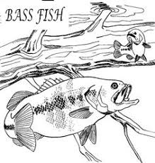 Bass Fishing Coloring Pages Fish