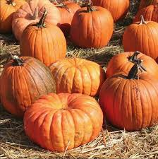 Old Auburn Pumpkin Patch by Best Of The Seasons Archives Visit Placer County Located In