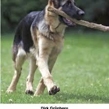 ein hund namens money on23yj91gml0
