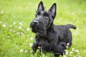 Non Shedding Small Dog Breeds List by If You Don U0027t Think These Little Dogs Are Cute You Might Not Be