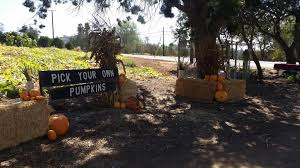 Bonita Pumpkin Patch Sweetwater Road by San Diego Events For October 23 2017 San Diego Reader