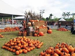 Coconut Grove Pumpkin Patch by Shell Lumber U0026 Hardware Home Facebook