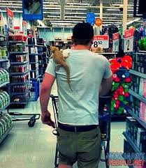 50 best walmart images on pinterest walmart shoppers only at