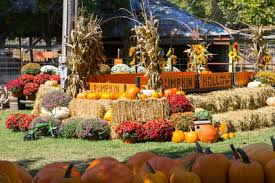 Pumpkin Patch Fort Collins by 10 Charming Arkansas Pumpkin Patches You Won U0027t Want To Miss This Year
