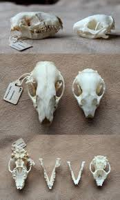 74 Best Skulls Images On Pinterest | Animal Skulls, Animal Anatomy ... 735 Best Skull Love Images On Pinterest Drawing And Art Bobby Fierro Dave Violette Blog Skulldiggery Many Fun Funky Ideas In The Garden Of Tiffany Homedecoration Skulls Skeleton Backyard My Pinterest Posts The Horned Beast Sculpture Palace Sykes 74 Skulls Antlers Artwork Theres A Hidden Theme In This Years Big Brother House Take Tching Post Idea I Showed It With Cacti Which Is Em Corsa Backyard Wild March 2014 42 Airbrushing Sheds Pop S Formation Creation Inc Sets