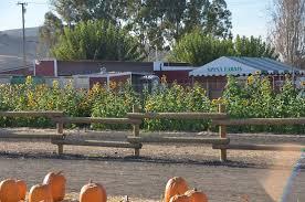 South San Jose Pumpkin Patch by Garlic Spina Farms San Jose Ca Picture Of Spina Farms Pumpkin