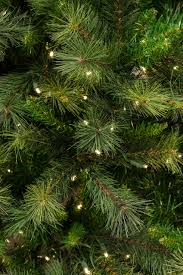 Fraser Christmas Tree Farm by 10 Ft Canyon Pine Christmas Tree With Smart String Lighting