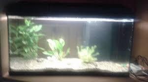 ph aquarium eau douce scalaires paramètres de l eau nécessaires ph kh gh température