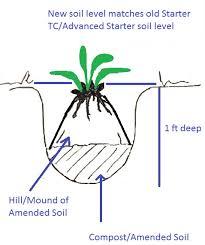 hosta planting how to plant hosta step by step planting