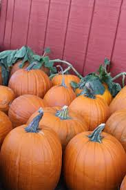 Best Oklahoma Pumpkin Patches by 15 Best Pumpkin Picking Oklahoma Agritourism Images On Pinterest