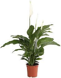 5 pflanzen für das schlafzimmer für frischere luft mehr