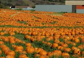 Pumpkin Patch With Petting Zoo Inland Empire by Los Angeles Area Of California Pumpkin Patches Corn Mazes