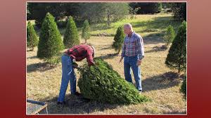 Christmas Tree Permits Colorado Springs by Christmas Tree Permits Available Nov 20 Koaa Com Continuous