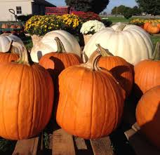 Myers Pumpkin Patch Facebook by Piggott U0027s Farm Market U0026 Bakery Posts Facebook