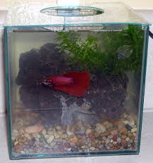 Cloudy Water From Sink by My Betta Tank Has Cloudy Water With Bad Odor My Aquarium Club
