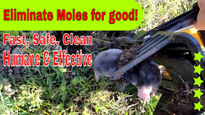 How To Get Rid Of The Moles In Your Yard/Mole Trappin' And Pest ... How To Get Rid Of Moles Organic Gardening Blog Cat Captures Mole In My Neighbors Backyard Youtube Animal Wikipedia Identify And In The Garden Or Yard Daily Home Renovation Tips Vs The Part 1 Damaging Our Lawn When Are Most Active Dec 2017 Uerstanding Their Behavior Mole Gassing Pests Get Correct Remedy Liftyles Sonic Molechaser Alinum Covers 11250 Sq Ft Model 7900