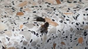 fliegenfalle für fruchtfliegen wespen und fliegen frag mutti