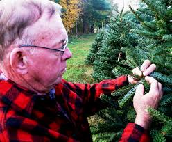 Longest Lasting Christmas Tree by Another Good Year For Indiana Christmas Trees Purdue University