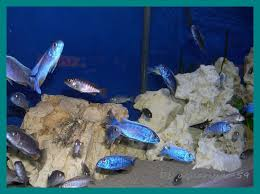 aquarium geant a visiter belgique visite en hollande et allemagne