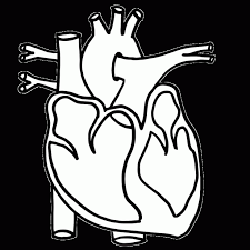 Coloring Download Anatomical Heart Pages Clipart To Print