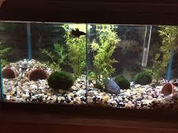 Homemade Lava Lamp Fish Tank by 256 Best Fish Tanks Aquariums Setup Ideas Images On Pinterest