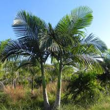 Palms: Grow Your Own Tropical Paradise Archie Eats Kings Plant Barn Archies Journal By Michael Ngariki Garden Design Cafe Henderson Aucklandnzcom Daniels Wood Land On The Set For Redwood Kippen Home Facebook Youtube Monthly Gardening Checklist December