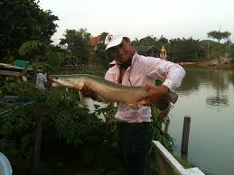 Bangkokhooker's Fishing In Thailand | An Affordable Arapaima Pond Backyard Tilapia Fish Farm August 192011 Update Youtube Fish Farming How To Make It Profitable For Small Families Checking Size Backyard Catfish To Start A Homestead Or Commercial Tilapia In Earthen Pond 2017 Part 1 Preparation And Views Of Wai Opae Tide Pools From Every Roo Vrbo Sustainable Dig Raise Bangkhookers Fishing Thailand An Affordable Arapaima In Your Home Worldwide Aquaponics Garden Table Rmbdesign Guide Building A Growing Farm Sale Farming Pinterest