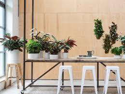 mit zimmerpflanzen entspannen botanische wellness