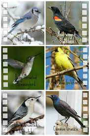 Easy Birdwatching With Kids | Play | CBC Parents Wild Birds Unlimited Common Backyard Bird Nest Idenfication Sounds Articles Old Farmers Almanac Whibreasted Nuthatch Sitta Carolinensis Birds Certhioidea Best 25 Birds Ideas On Pinterest Pretty Blue A Brown Headed Cowbird At Thicksons Woods Debunk 12 Myths About Feeding Cute Rbreasted Nuthatch Winter Of Wisconsin Species Infographic Poster By Diana Sudyka The Worlds Photos And Sviceberry Flickr Hive Mind Grow These Native Plants So Your Can Feast Audubon What I Find In My Ontario Canada Youtube